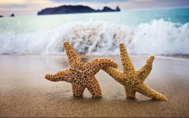 le couple d'étoiles de mer sur la plage